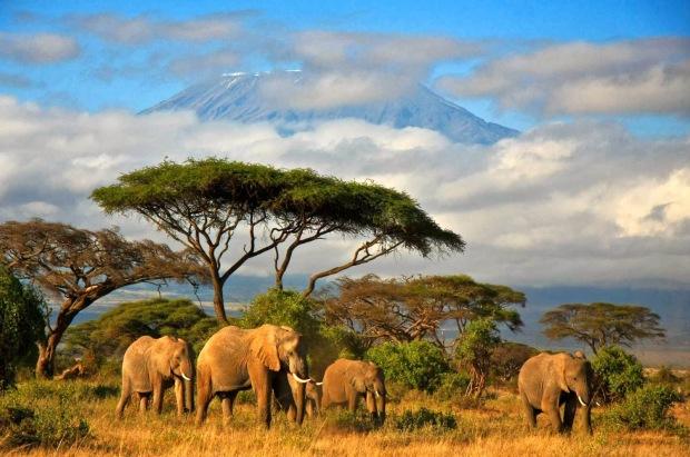 Tanzania.original.9619